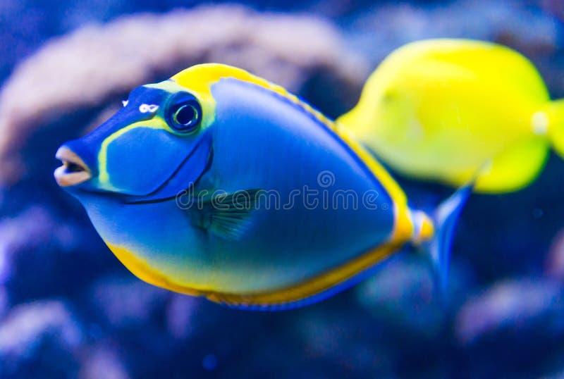 Pesci variopinti in acquario immagini stock libere da diritti