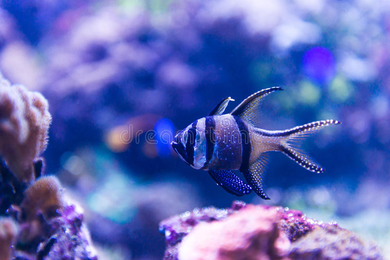 Pesci variopinti in acquario fotografie stock libere da diritti