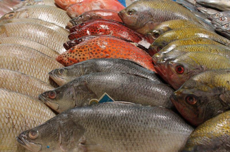 Pescivendolo della Tailandia della stalla del pesce di alimento della via fotografia stock