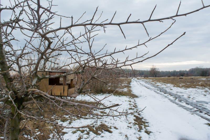 Pesebre vacío de madera de los pájaros en árbol durante la estación del invierno foto de archivo libre de regalías
