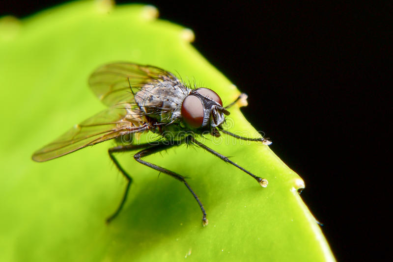 Pesky Fly royalty free stock images