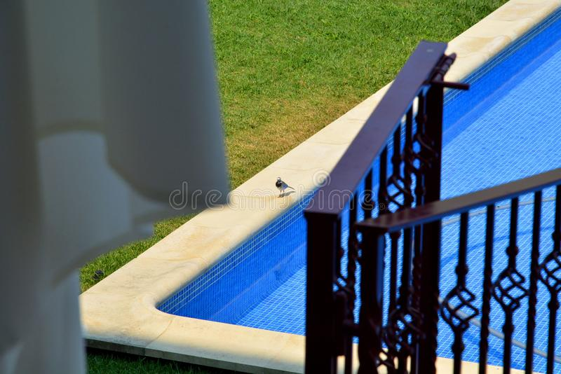 Peso DA Regua, Portugal - Pool und Piepmatz im Hotel stockbilder