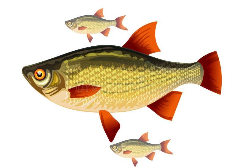 Pesque com aletas vermelhas ilustração stock