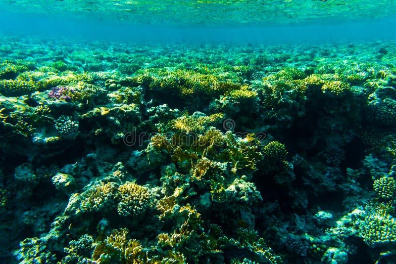 Pesque del arrecife de coral, Sharm el Sheikh, Egipto Mundo del mar imagen de archivo libre de regalías