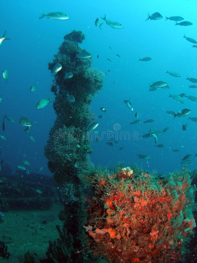 Pesque em um recife foto de stock royalty free
