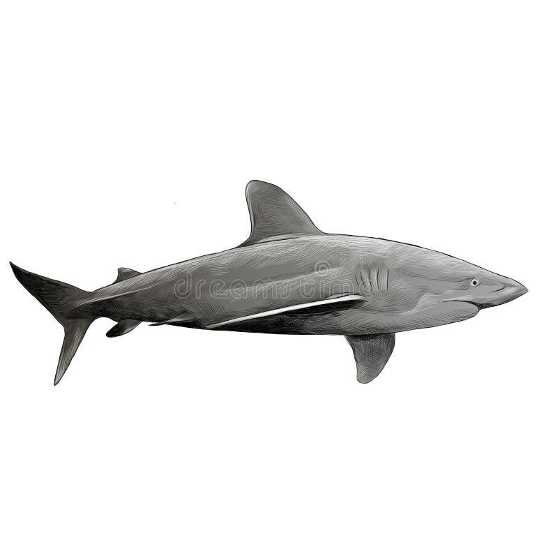 Pesque gráficos de vetor do esboço do tubarão ilustração royalty free