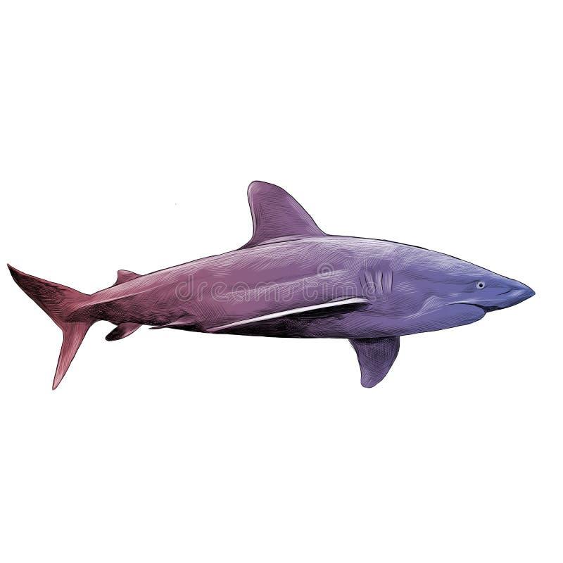 Pesque gráficos de vetor do esboço do tubarão ilustração do vetor