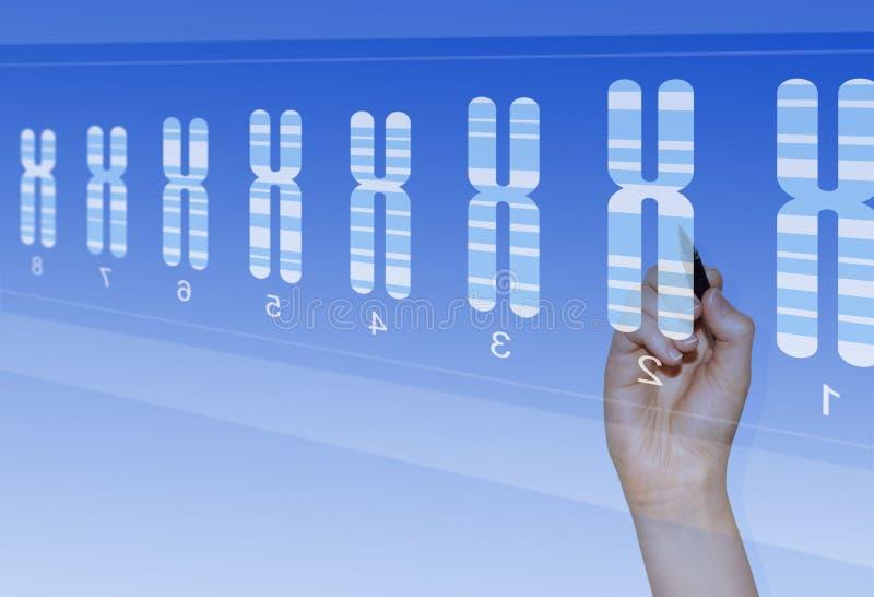 Pesquisa da genética do cromossoma fotografia de stock