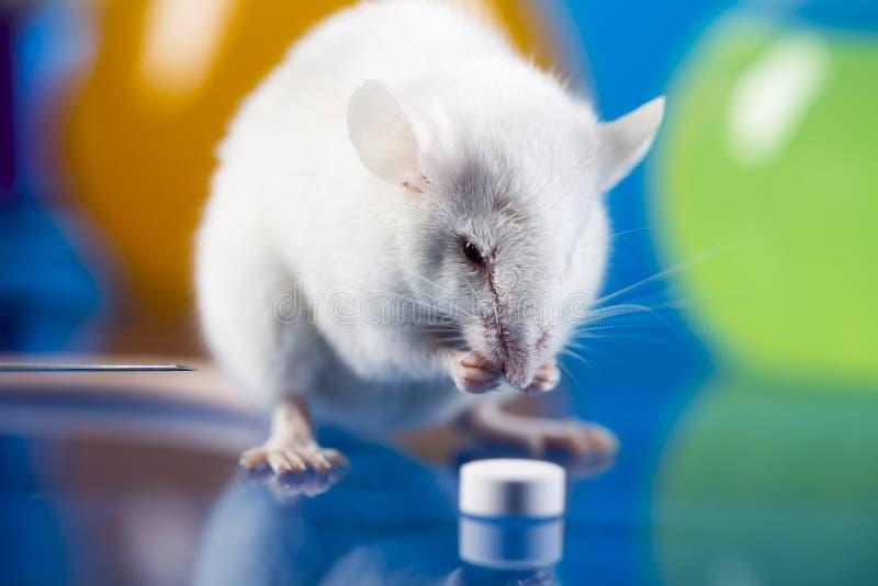 Pesquisa sobre mauses no laboratório imagens de stock