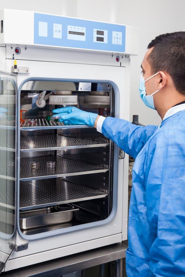 Pesquisador que introduz um prato de petri em uma incubadora imagens de stock royalty free