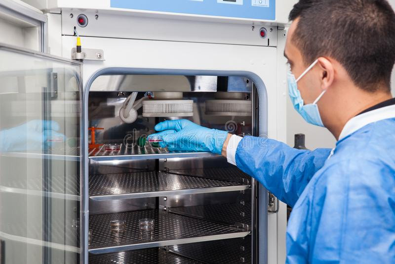 Pesquisador que introduz um prato de petri em uma incubadora imagem de stock