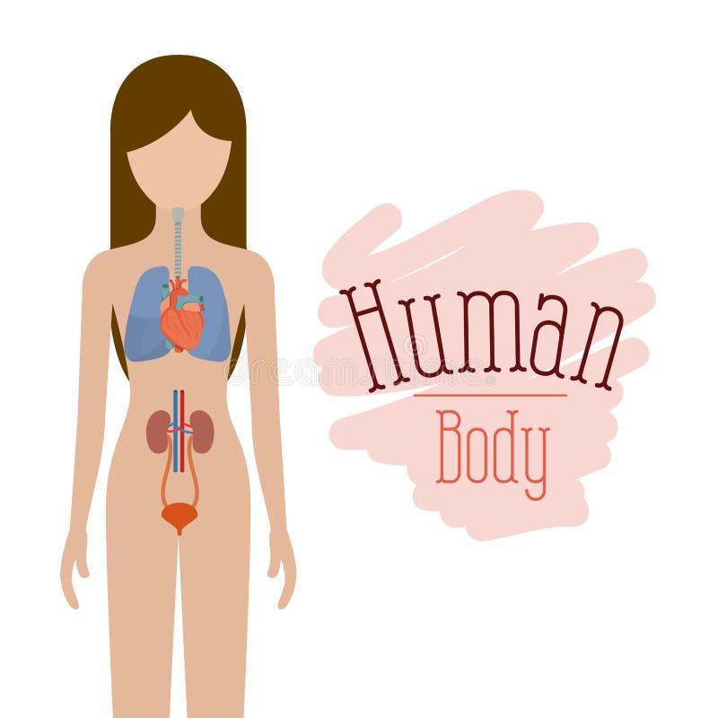 Pessoa fêmea da silhueta colorida com sistemas de corpo humano ilustração stock