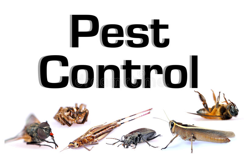 Pest control. Concept image of pest control over white background royalty free stock photo