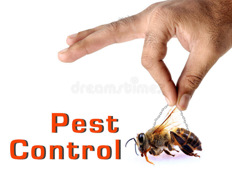 Pest control. Concept image of pest control over white background royalty free stock image