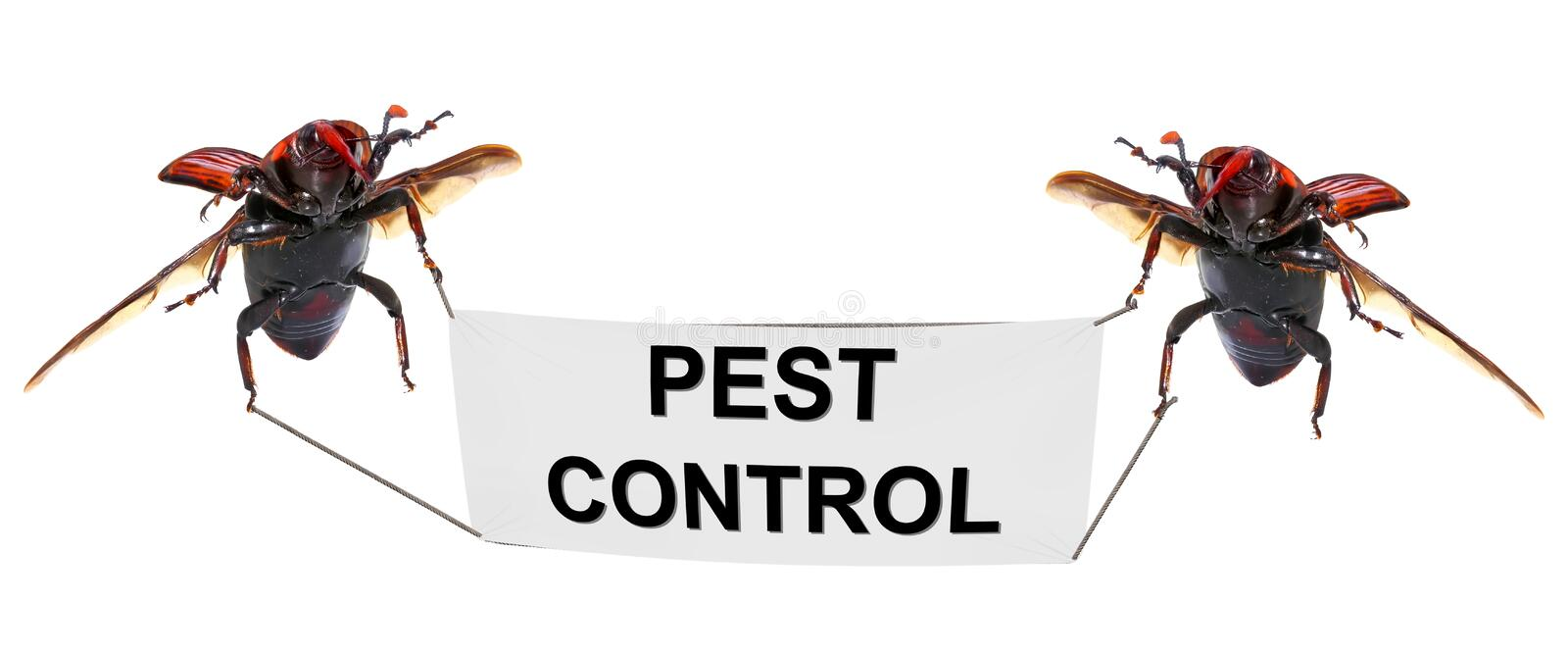 Pest control stock photo