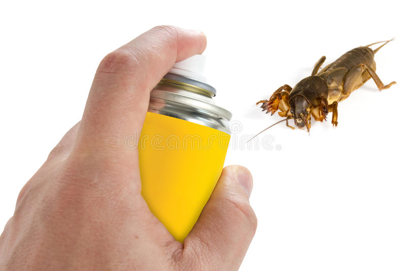 Pest control. Spraying insecticide on the mole cricket stock photography