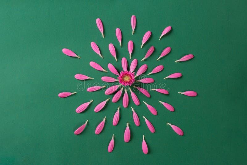 Pestals cor-de-rosa do gerbera no fundo verde foto de stock royalty free