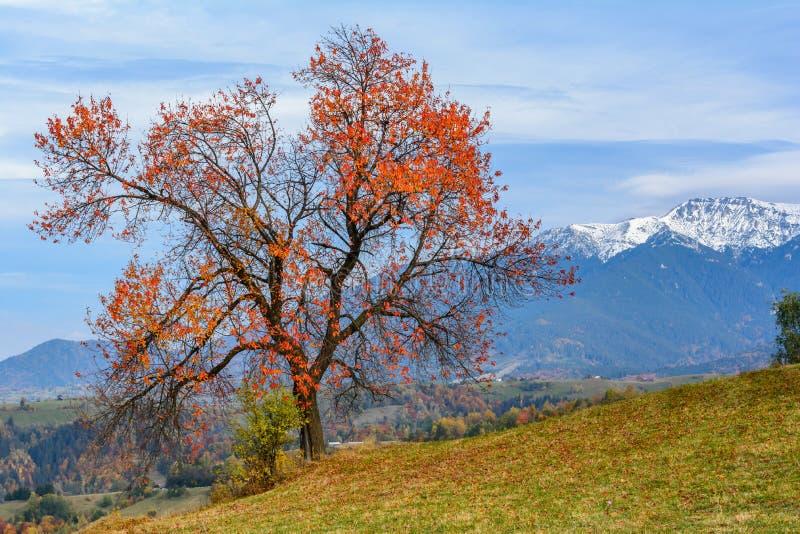 Pestera by, Rumänien: Höstlandskap med de Bucegi bergen arkivfoton