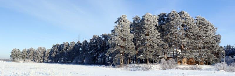 Pesterevskaya gaju zima zdjęcia stock