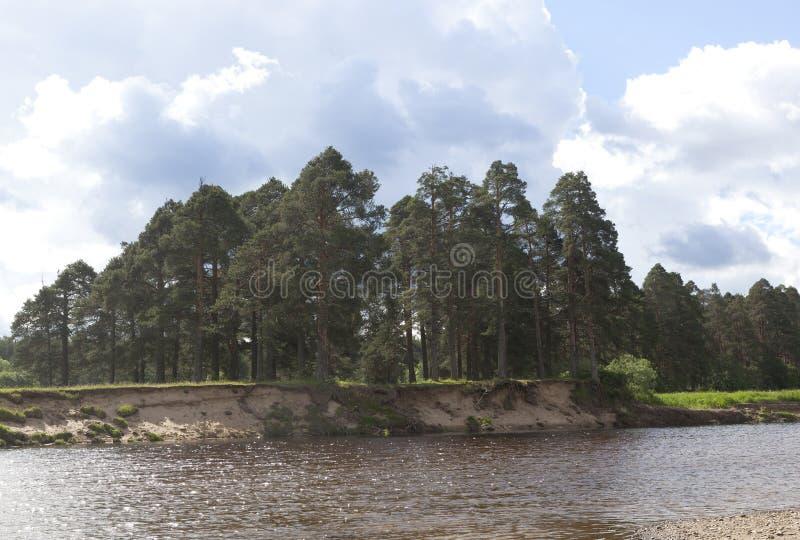 Pesterevskaya-Waldung im Dorf von Region Verkhovazhye Vologda stockfotos