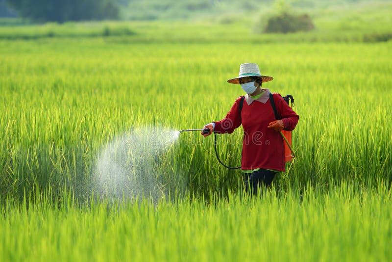 Pesticide, Landbouwers die pesticide in padieveld bespuiten die beschermende kleding dragen stock fotografie