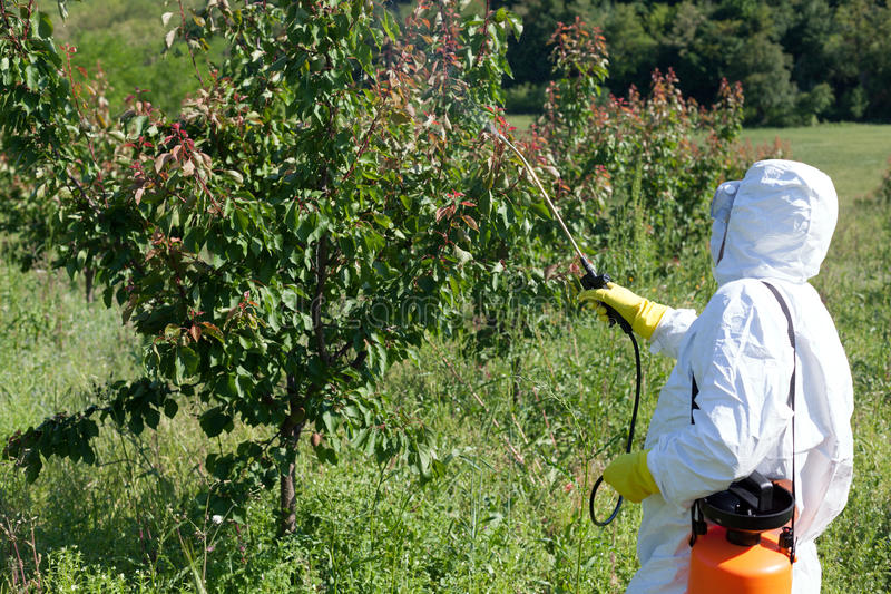 Pesticide spraying stock images