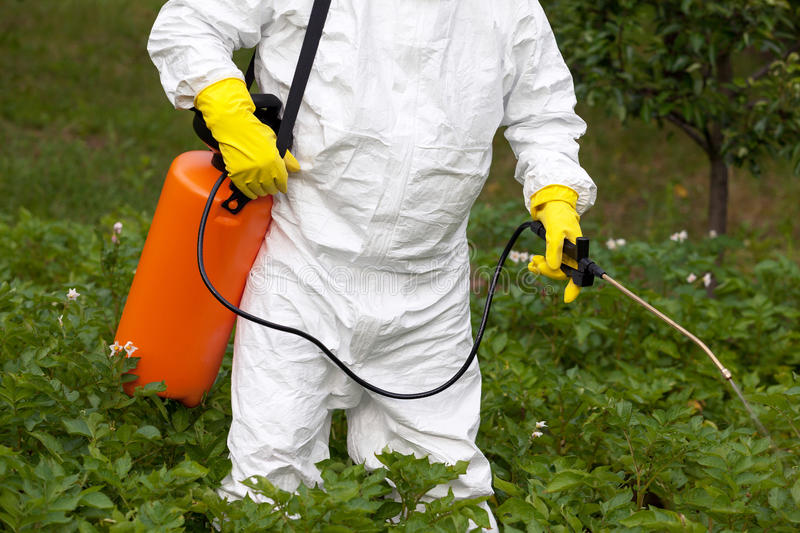 Pesticide spraying. Non-organic vegetables. royalty free stock photography