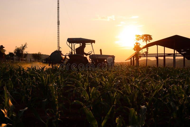 Pesticides de préparation et de pulvérisation d'agriculteur sur le champ photos libres de droits
