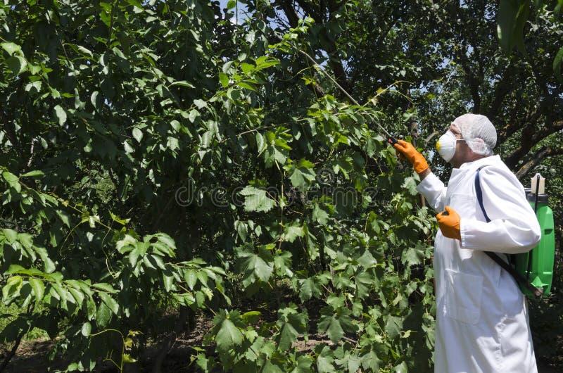 Pesticides de pulvérisation de travailleur d'Agricilture sur les arbres fruitiers dans le jardin image stock