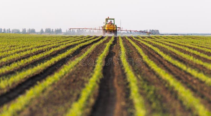 Pesticides de pulv?risation de tracteur au champ de ma?s image stock