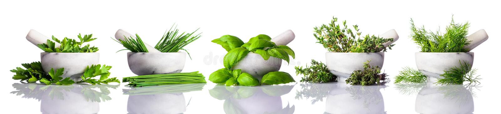 Pestle and Mortar with Green Herbs on White Background. Fresh green organic Herbs in Pestle and Mortar isolated on white background stock photo
