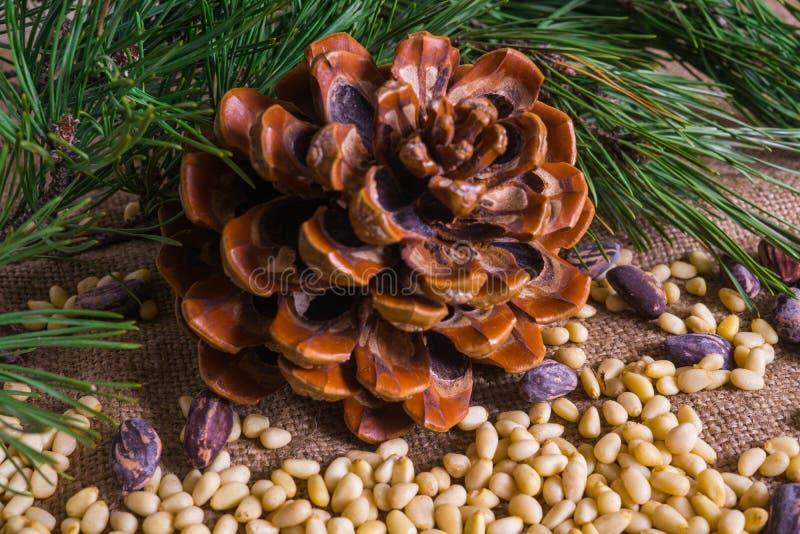 Pestoalla Genovese, Basil Sauce Gepeld en in shell met cederkegel stock foto