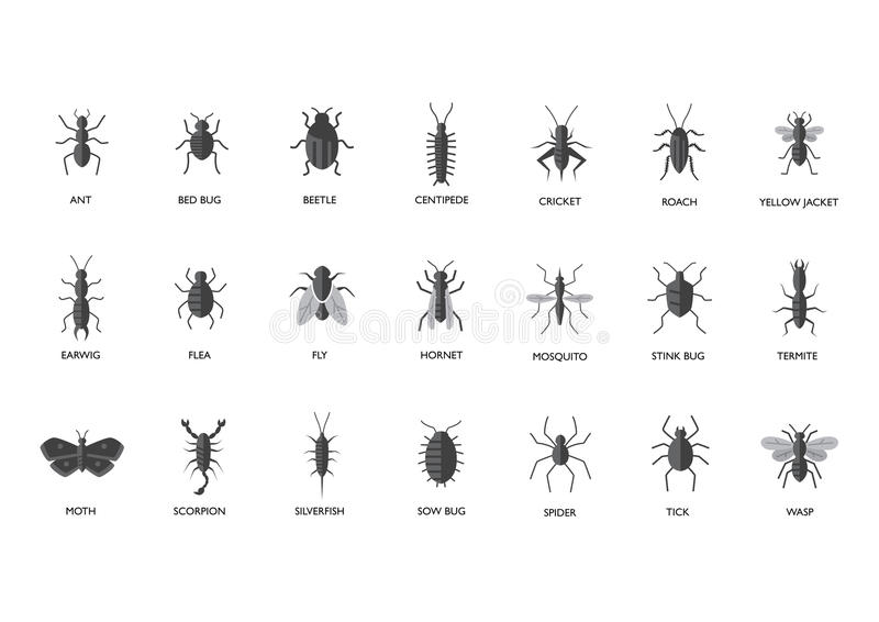Pests - Insects illustration. Set of different kinds of insect pests illustration. Can be used as bug identifier for websites and printed materials royalty free illustration