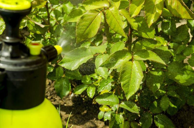 Pestycydu traktowanie kwiaty, drzewa i rośliny ogródu, obrazy royalty free