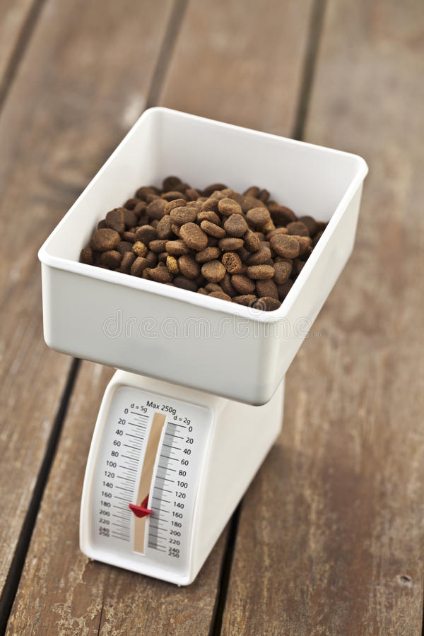 Pet's diet and Scale royalty free stock photos
