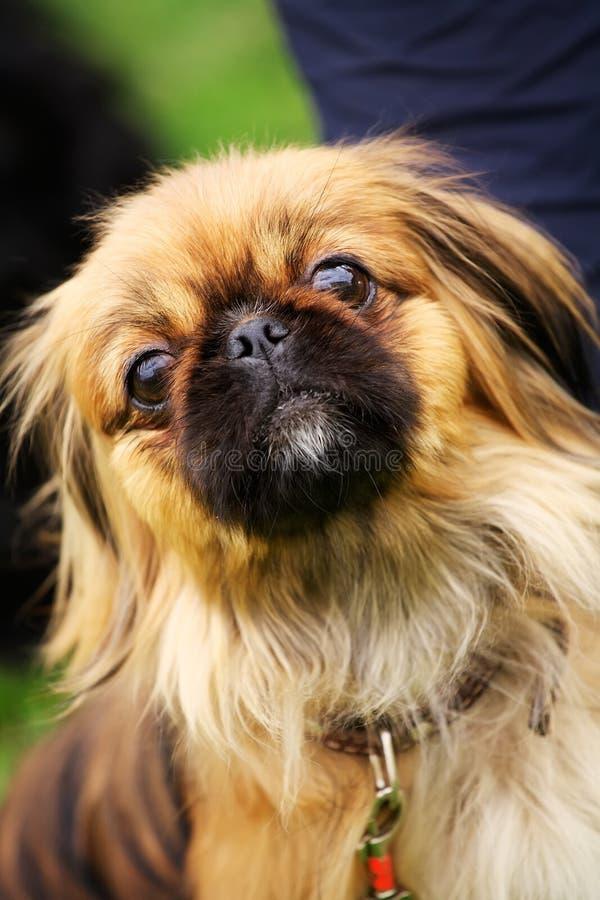 Free Pet. Stock Photo - 6414940