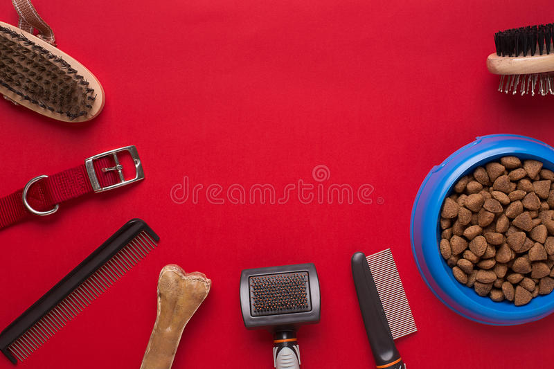 Pet accessories on red background. Top view. Still life. Copy space royalty free stock image