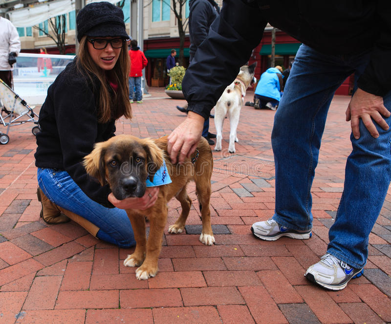 Pet Adoption Day Reston Town Center VA Editorial Photography