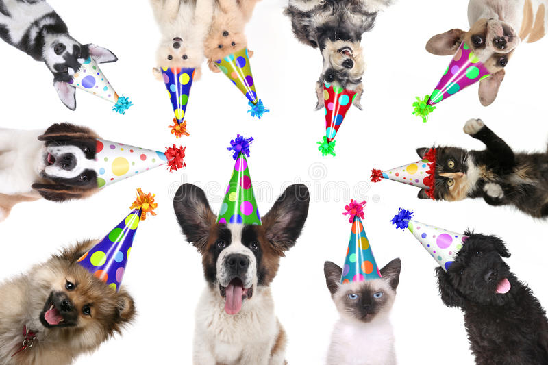 Pet Animals Isolated Wearing Birthday Hats for a Party stock photo
