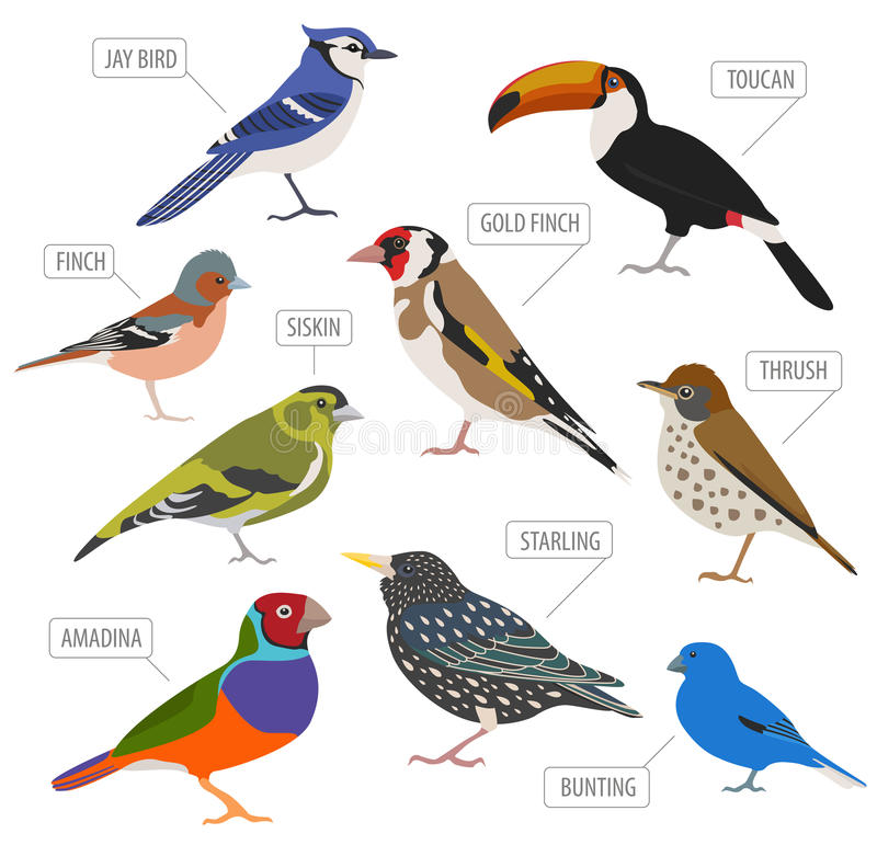 Pet birds collection, breeds icon set flat style isolated on wh. Ite. Create own infographic about pets. Vector illustration royalty free illustration