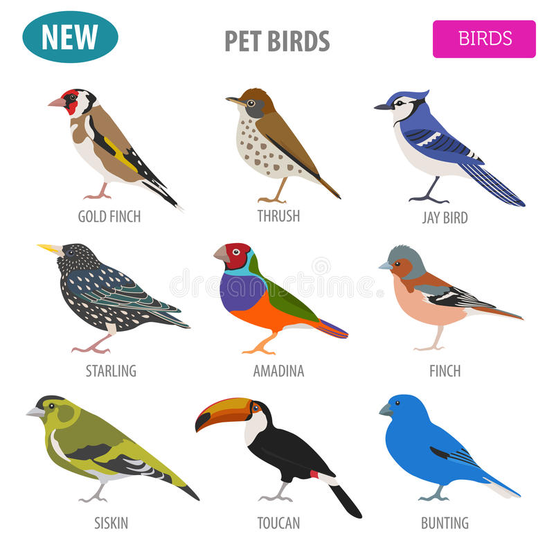 Pet birds collection, breeds icon set flat style isolated on wh. Ite. Create own infographic about pets. Vector illustration vector illustration
