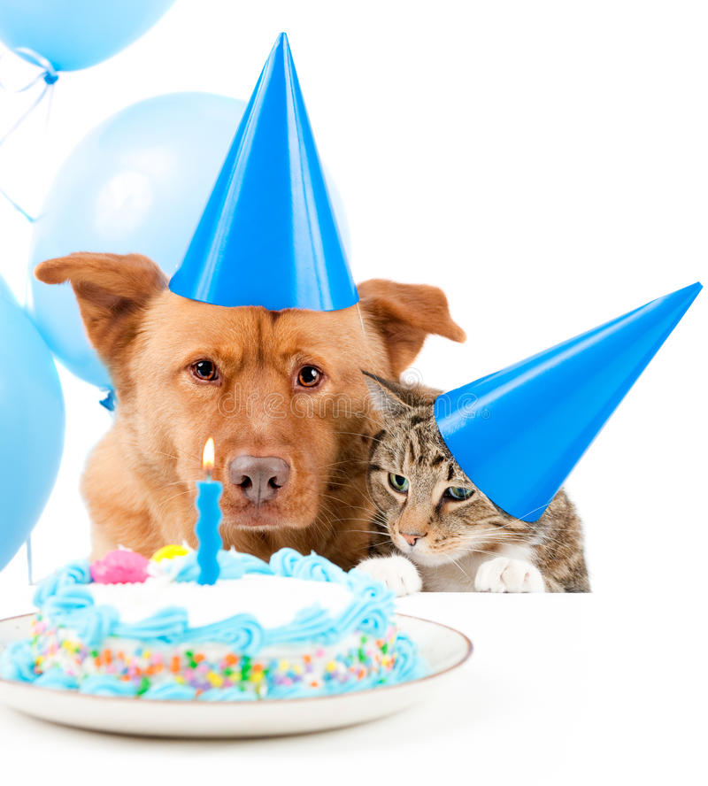 Pet birthday party. Dog and cat Birthday party with cake royalty free stock image