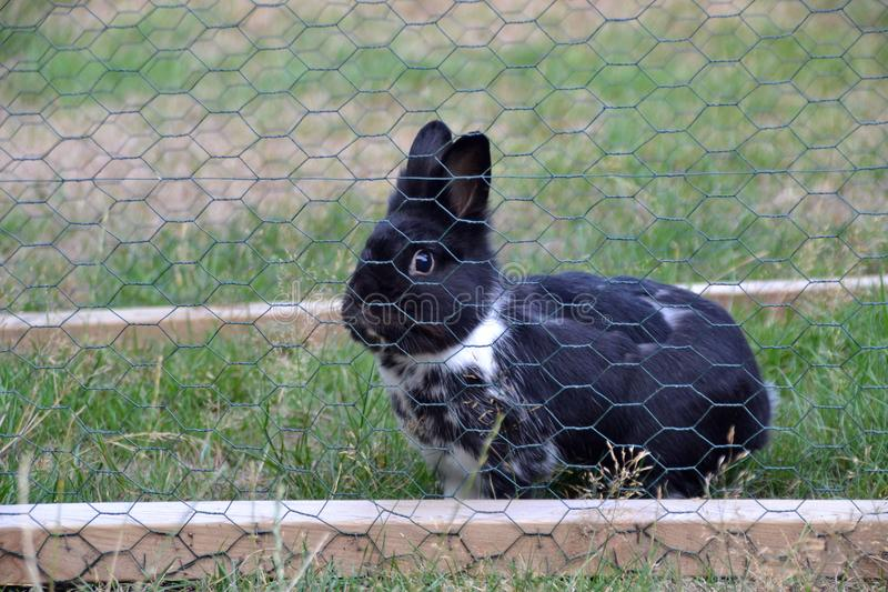 Pet bunny behind a mesh fence in the garden stock images
