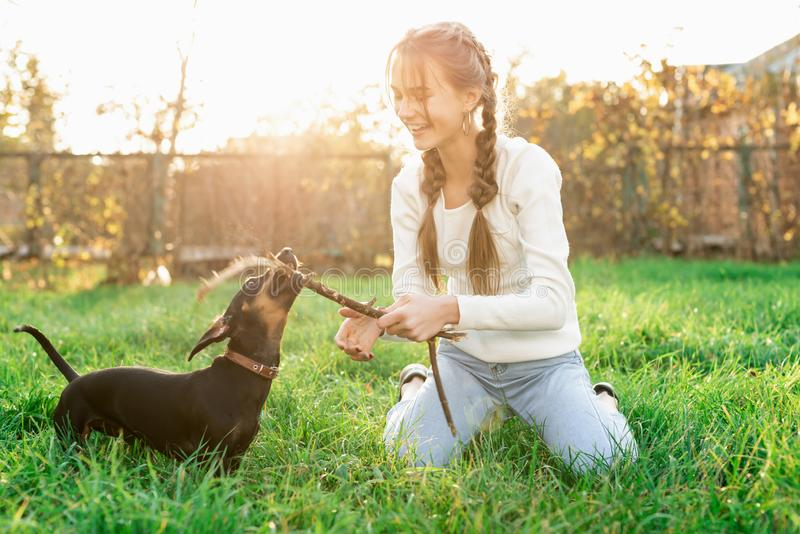 Funny dachshund playing with her owner in the grass royalty free stock photo