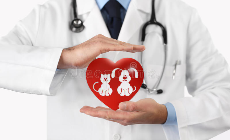 Pet care concept veterinarian hands with animal and heart icons stock image