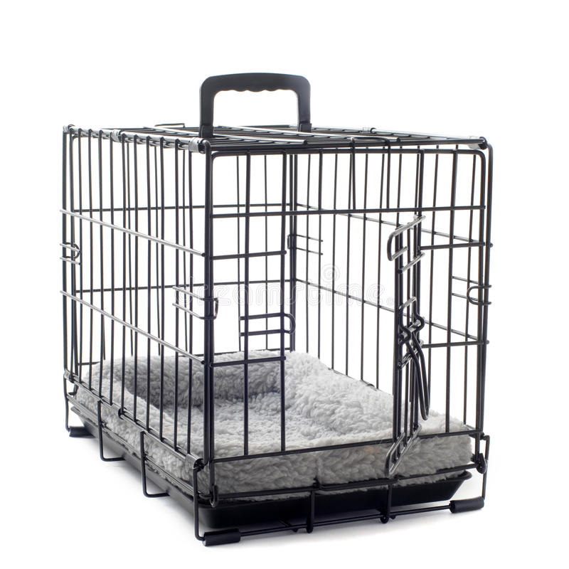Download Pet carrier with cushion stock photo. Image of entrance - 26563280