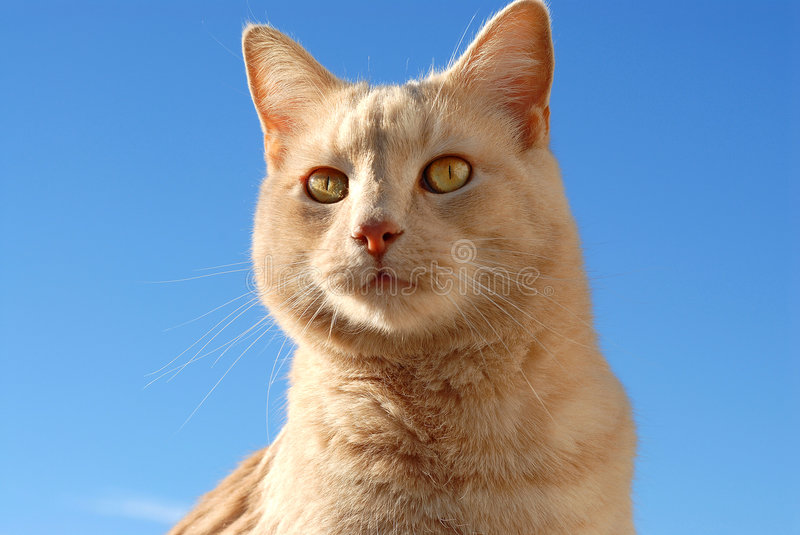 Download Pet Cat stock image. Image of kitty, meow, outside, animal - 1034871