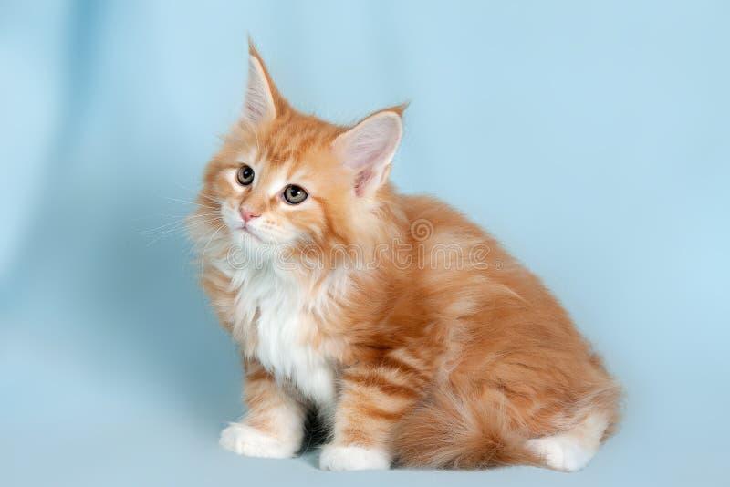 Pet cat. Portrait of sweet pet cat stock photos