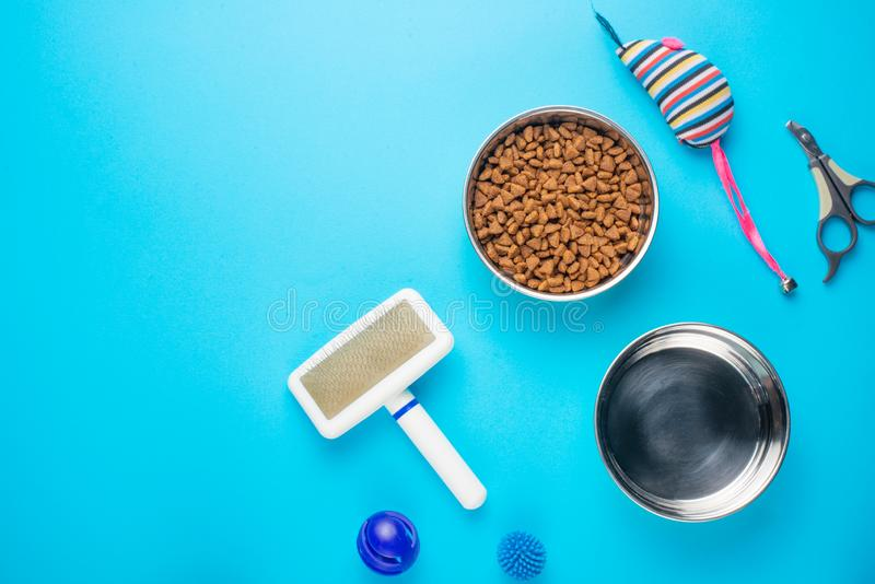 Pet, cat, food and accessories of cat life flat lay, with space for design, on blue background. Animal object assortment kitten play toy bowl care top accessory royalty free stock images