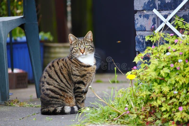 Pet cat in garden royalty free stock photo